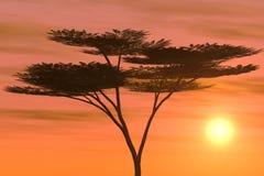 热带日落的结构树 库存照片