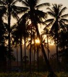热带日落 库存照片