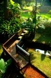 热带早期的庭院的早晨 免版税库存照片