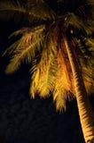 热带晚上 免版税库存照片