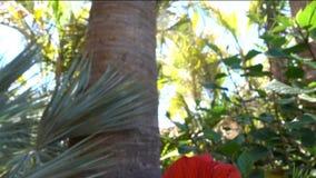 热带晴朗的目的地,夏威夷 股票视频