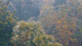 热带暴雨在反对一个绿色森林的背景的密林有棕榈树的 影视素材