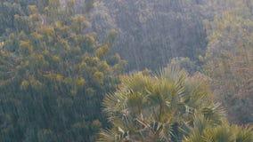 热带暴雨在反对一个绿色森林的背景的密林有棕榈树的 股票视频