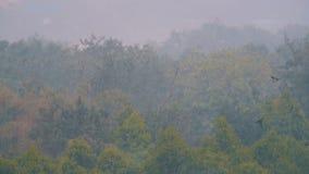 热带暴雨在反对一个绿色森林的背景的密林 股票视频