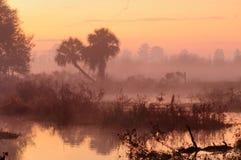 热带有薄雾的日出 库存图片