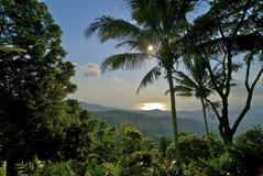 热带木头 库存照片