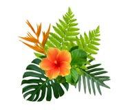 热带木槿和鹤望兰reginae在绿色monstera开花,并且蕨在白色留给植物灌木被隔绝 库存图片