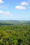 热带机盖的雨林 免版税库存照片