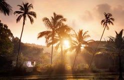 热带村庄在果阿 免版税库存照片