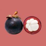热带果子孤立紫红色的山竹果树 免版税库存图片