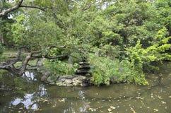 热带树和池塘在植物园台北里 免版税库存图片
