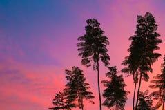 热带树在日落的图森亚利桑那 库存图片