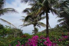 热带树在海南 免版税库存图片