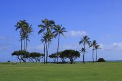 热带树在海滩公园 免版税库存图片