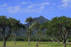 热带树在海滩公园 图库摄影
