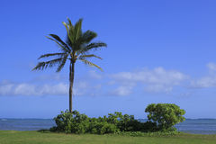 热带树在海滩公园 库存照片