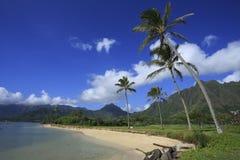 热带树在海滩公园 库存图片