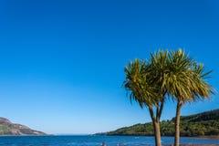 热带树在苏格兰海岛 Lamlash,艾伦,苏格兰 免版税图库摄影