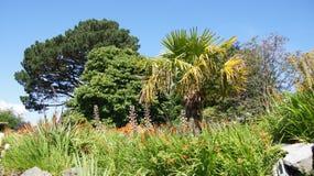 热带树在Bodnant庭院里 免版税库存照片