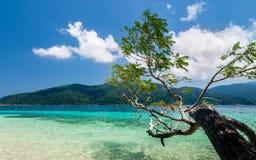 热带树垂悬在一个含沙白色海滩 免版税库存照片
