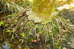 热带树基地  库存图片
