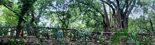 热带树庭院。长的篱芭。 免版税库存图片