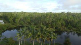 热带树池塘 图库摄影