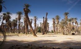 热带树熔炉小河死亡谷绿洲  免版税库存照片