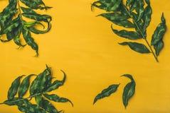 热带树绿色离开在明亮的黄色背景,拷贝空间 库存照片
