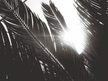 热带树荫 免版税图库摄影