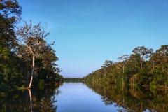 热带树围拢的美好的河视图 图库摄影