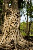 热带树 免版税库存照片