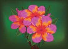 热带桃红色花向量分行  免版税库存图片
