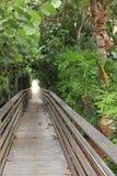 热带桥梁的森林 图库摄影