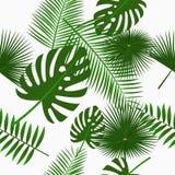 热带棕榈叶无缝的样式,与密林叶子的背景 与异乎寻常的植物的背景 向量 库存图片