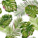 热带棕榈叶无缝的样式 水彩花卉背景 织品的,纺织品异乎寻常的植物的设计 皇族释放例证