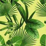 热带棕榈叶无缝的背景 免版税库存图片