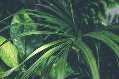 热带棕榈叶纹理,自然深绿背景 库存照片