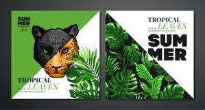 热带棕榈叶背景 免版税库存照片