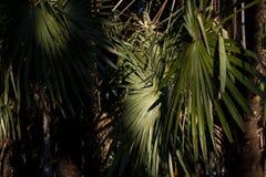 热带棕榈叶,花卉样式背景,真正的照片 免版税库存图片