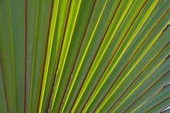 热带棕榈叶 免版税库存图片