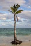 热带棕榈小屋 库存图片