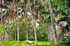 热带棕榈庭院在美好的天堂 库存图片