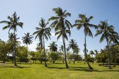 热带棕榈树在Cayo Levantado,多米尼加共和国打高尔夫球地形 免版税库存照片