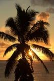 热带棕榈树日落,毛伊,夏威夷 免版税图库摄影