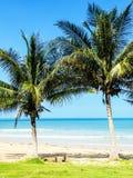 热带棕榈树海滩 免版税图库摄影