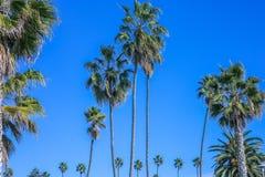 热带棕榈树的假期图象在蓝天的 免版税库存图片