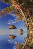 热带棕榈树的反射在海洋 免版税库存图片