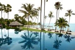 热带棕榈树看法从水池手段的 免版税图库摄影