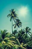 热带棕榈树绿洲在阳光下 库存图片